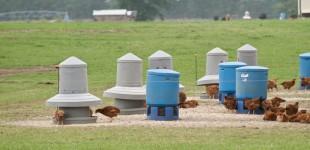 Farms :: White Oak Pastures :: Montana Photographer