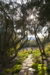 Dreamy Garden Moment :: Montana Editorial and Commercial Photographer